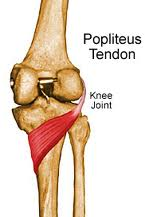 popliteus-tendon