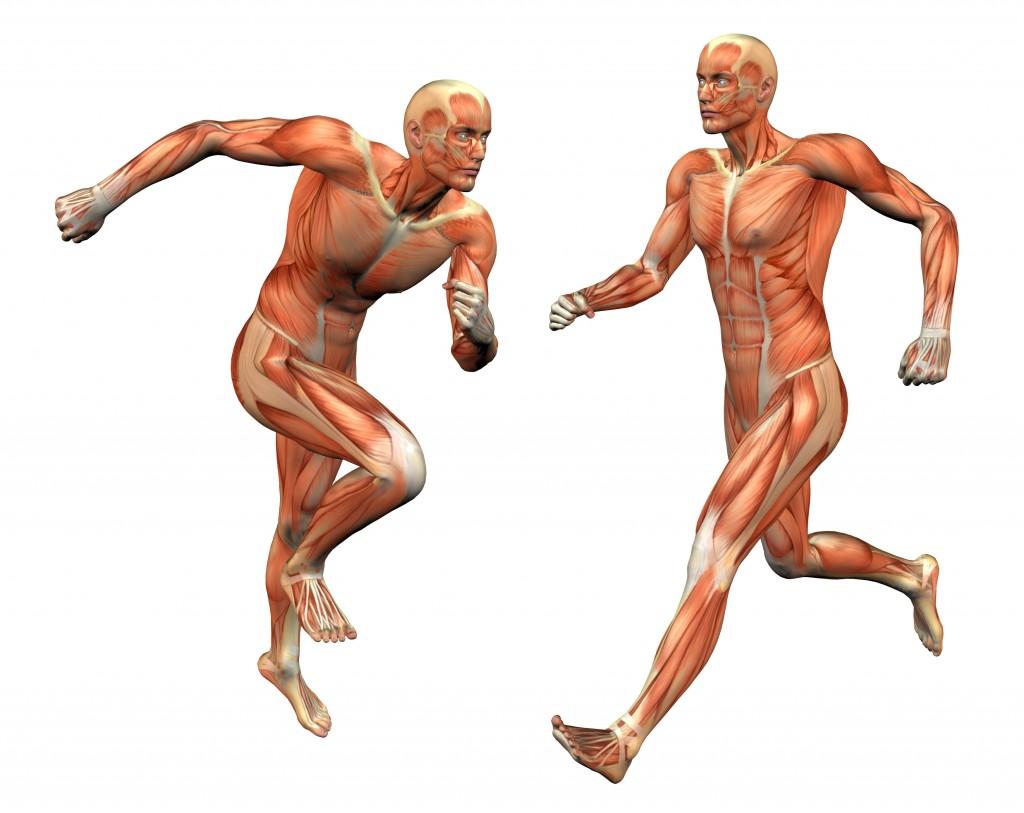 MuscleManRunning-1024x813